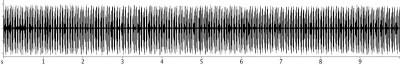 Conocephalus fuscus
