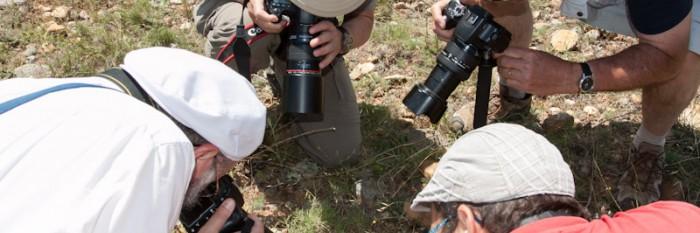 Natur- und Fotoreise zu den Heuschrecken Südfrankreichs 2012