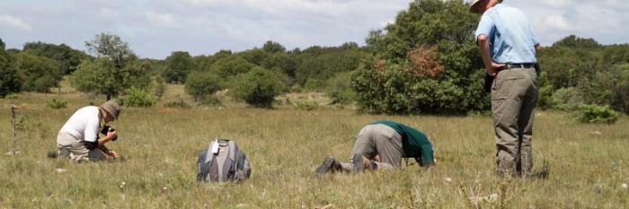 Natur- und Fotoreise zu den Heuschrecken Südfrankreichs 2014