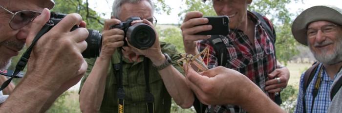 Natur- und Fotoreise zu den Heuschrecken Nordgriechenlands 2017