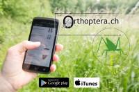 Neue Orthoptera-App Versionen 2015