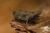 Six new species to Portugal