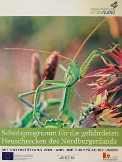 Schutzprogramm für die gefährdeten Heuschrecken des Nordburgenlands