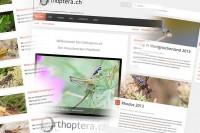 Orthoptera.ch in frischem Gewand