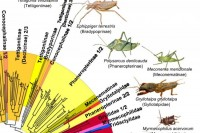 DNA barcoding central European Orthoptera