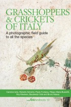 Grasshoppers & Crickets of Italy