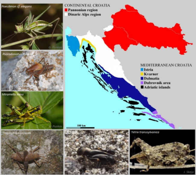First critical checklist Croatian Orthoptera